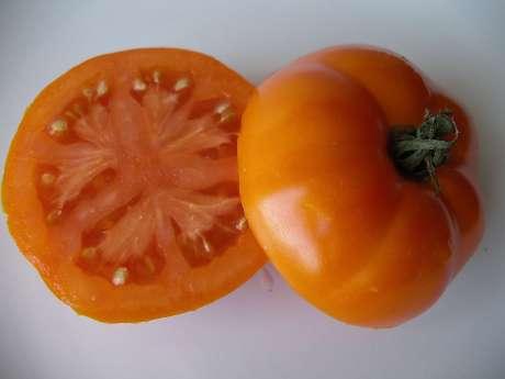 Tomato, Caro Rich